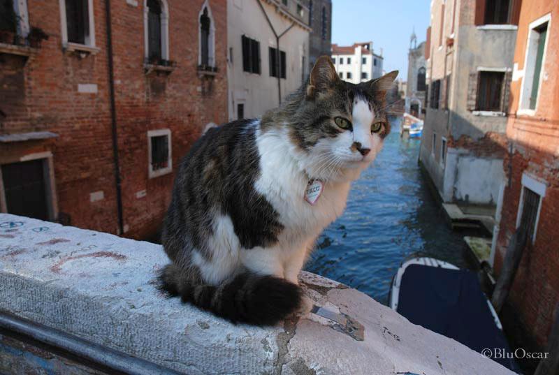 Gatti veneziani 19 02 2010 N 3