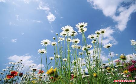 Hình nền hoa đẹp Flower wallpaper HD cho máy tính