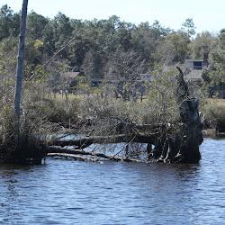 Fowl Marsh from Boat Feb3 2013 109