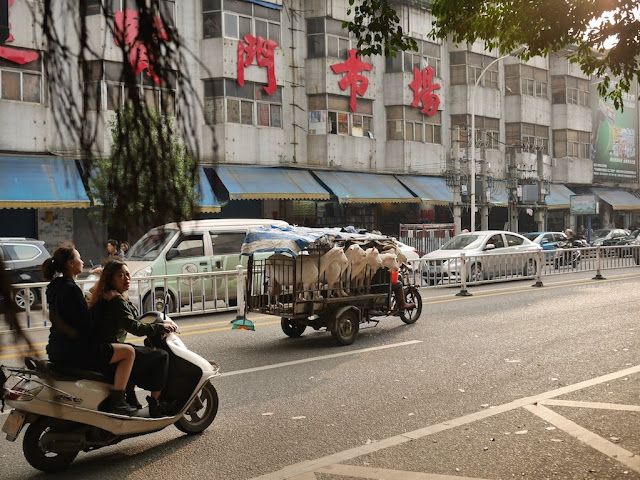 motorbike tricycle cart with 5 goats in Jieyang