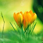Flower 018_1280px.jpg