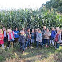 naar het maïsveld met de 5-jarigen