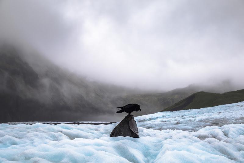 Il corvo di Nube