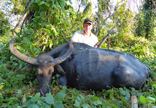 Thad Stevens again with an old buffalo cow with great horns.