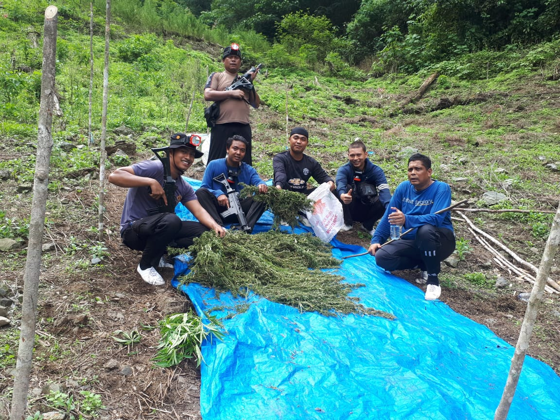 Kapolres Irsan Sinuhaji Pimpin Operasi Pemberantasan dan Pemusnahan Ladang Ganja di Pegunungan Simpang Pahu