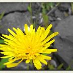 20120713-01-dandelion-lake.jpg