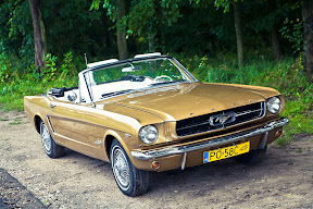 Mustang do �lubu Pozna�