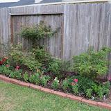 Gardening 2011 - 100_6788.JPG