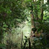 Crique Tortue, Saut Athanase sur l'Approuague (Guyane), 6 novembre 2012. Photo :J.-M. Gayman