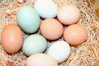 Rhode Island Red, Ameracauna & Barred Rock eggs.