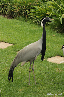 Montecasino Birdgarden