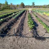Garden Ministry 2015 - OLGC%2BGarden%2BSpring%2B2015.jpg