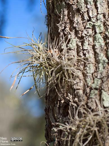 Tree60mmF28-1220058