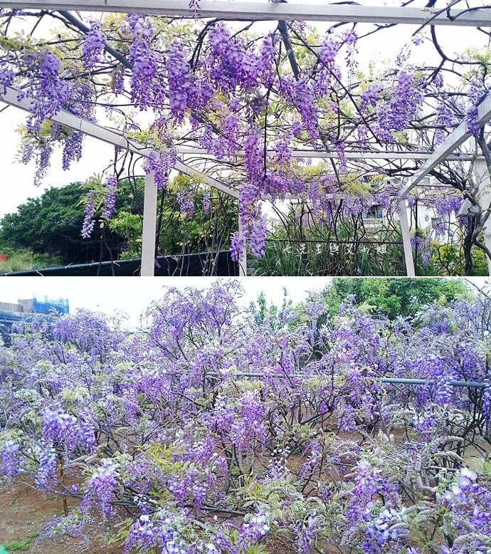4 紫藤咖啡園 2014