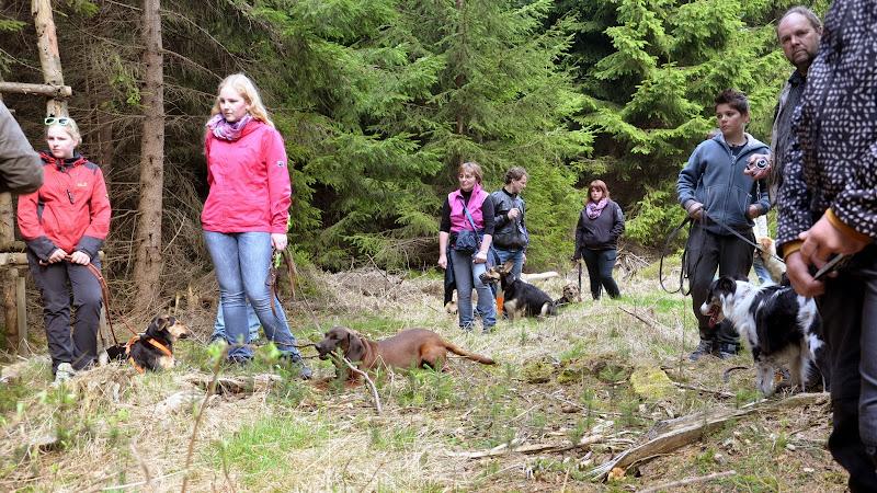 2014-04-13 - Waldführung am kleinen Waldstein (von Uwe Look) - DSC_0413.JPG