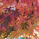 2013_10_13_Fall_Colors