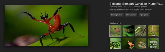 salah satunya ialah Belalang Sembah atau Belalang Sentadu dan ajaibnya 31 Fakta Belalang Sembah Berikut Akan Membuat Kamu Berpikir bahwa Ini Adalah Hewan Ajaib