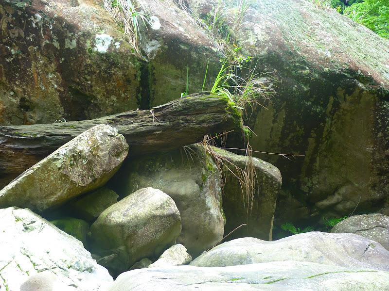 Petite randonnée au sud de Taufen, dans la région de Miaoli - P1330636.JPG
