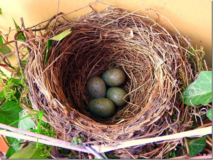 Das vierte Ei (6)