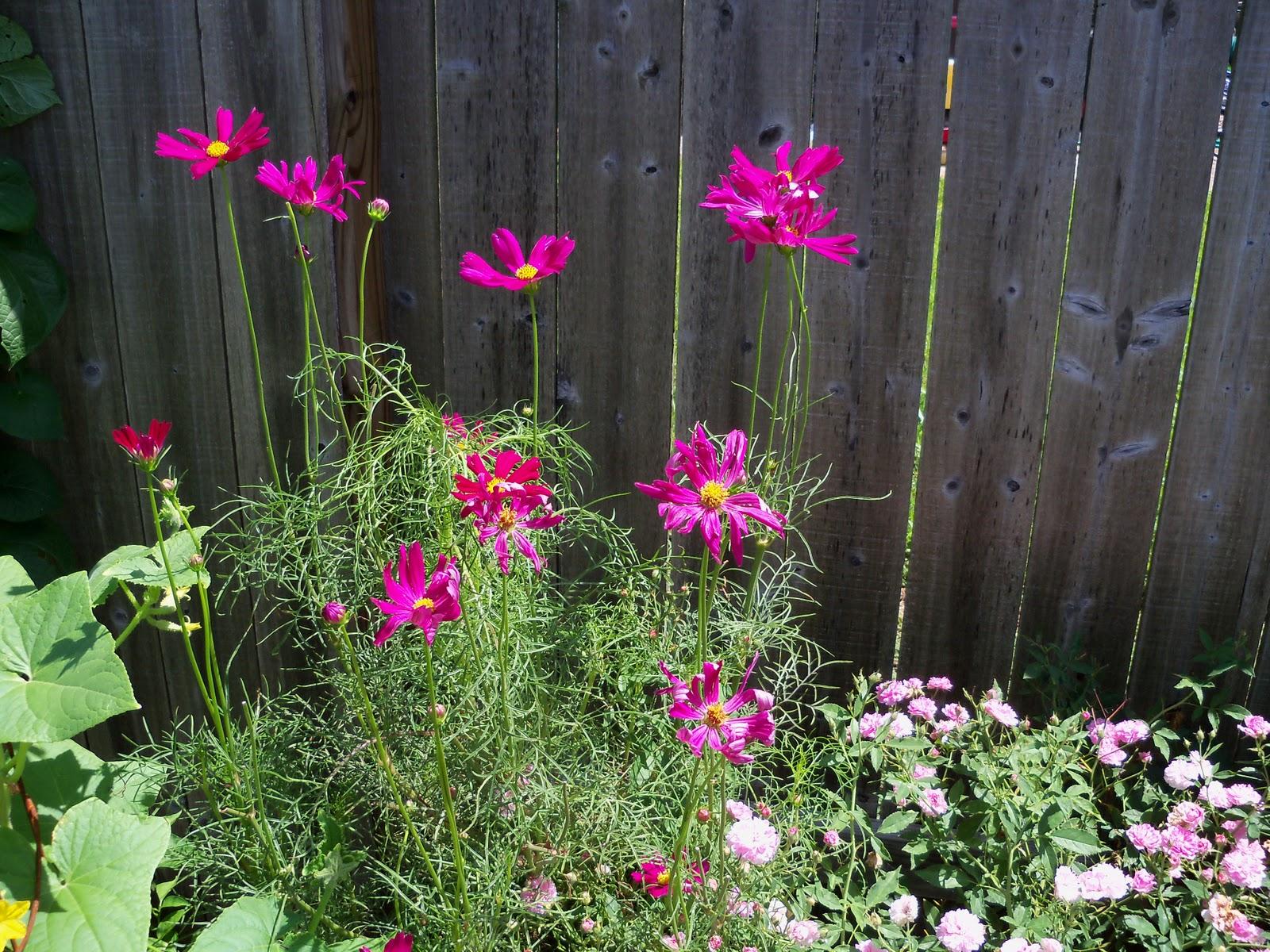 Gardening 2010, Part Three - 101_4379.JPG