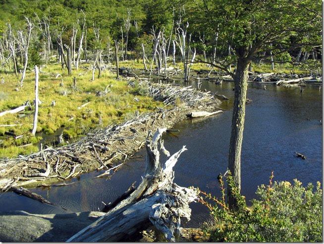 Ushuaia_Parque-Nacional-Terra-do-Fogo-diques-castores-2