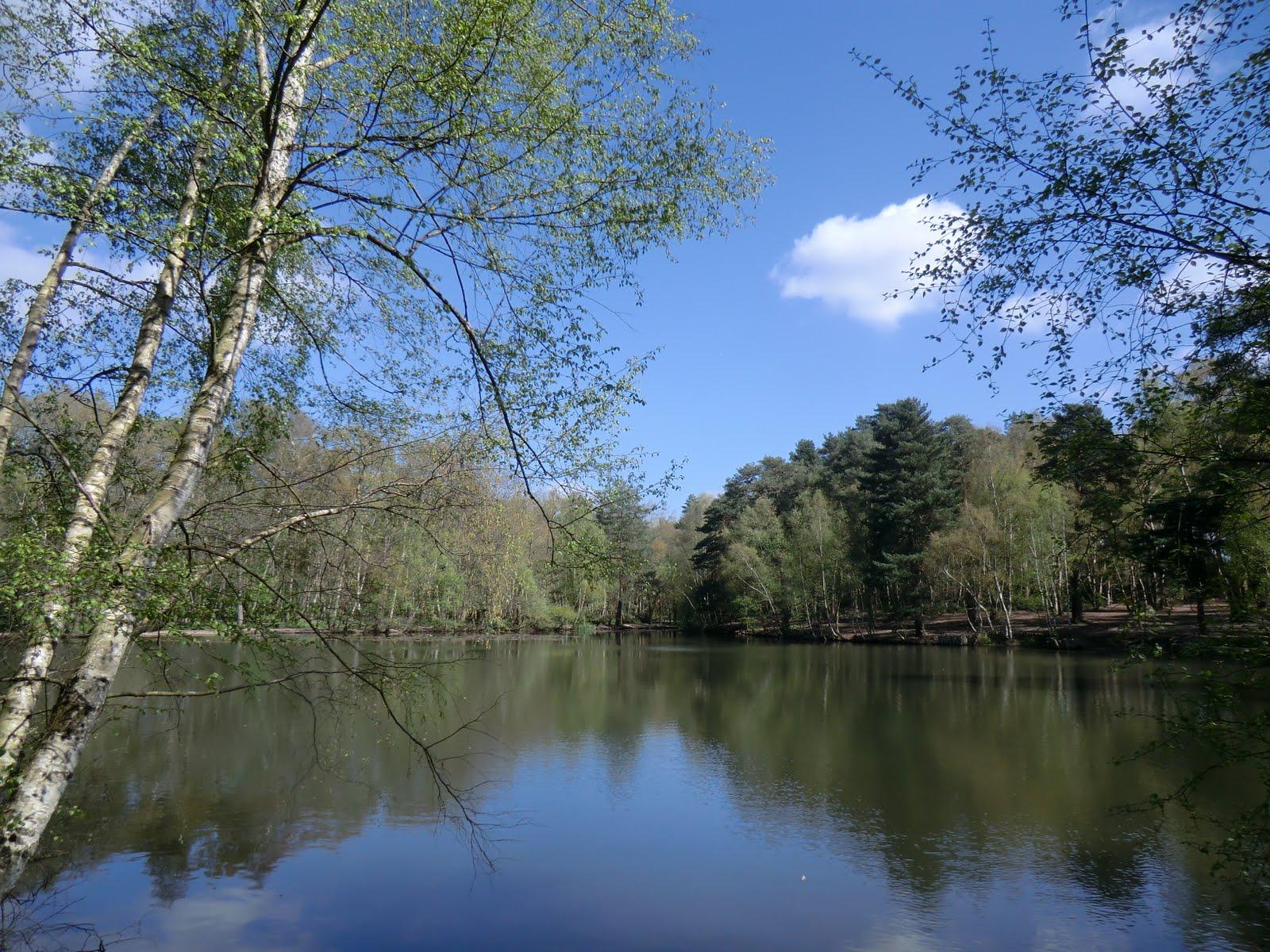CIMG0446 Heath Pond in spring