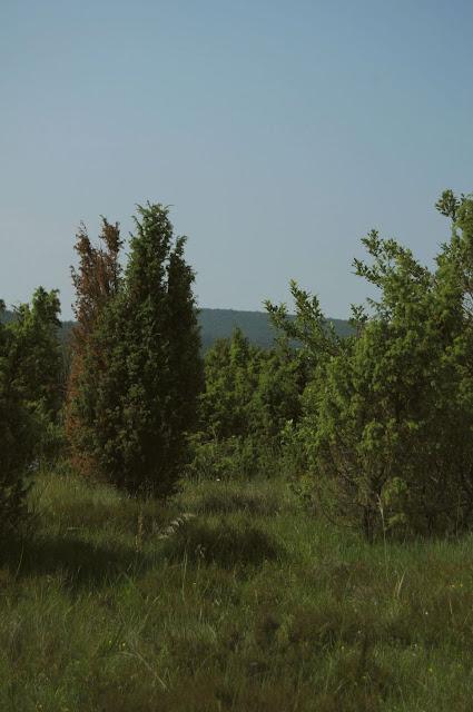 W Polanach Surowicznych - 18.06.2011_002.jpg