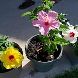Gardening 2010, Part Two - 101_2513.JPG