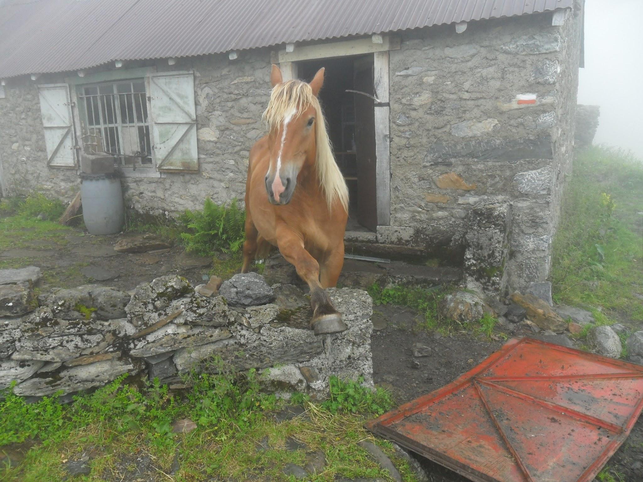 Pferd, Cabane d'Aula