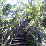 looking up the Casuarina Steps (43330)