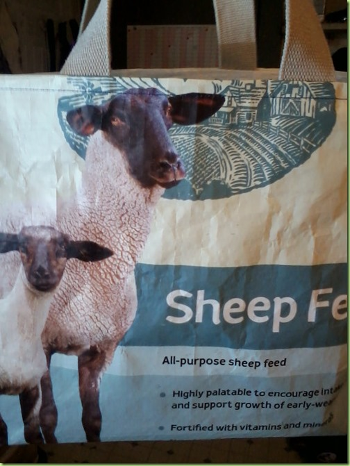 sheep feedbag