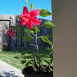 Gardening 2015 - 100_0514.JPG
