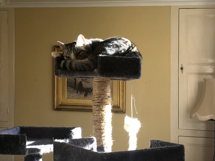05 Ruby on Top of Cat Tree 9-1-19