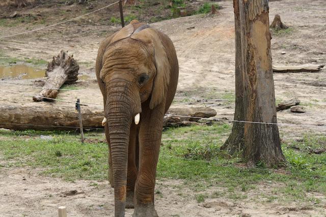 Zoo Snooze 2015 - IMG_7280.JPG