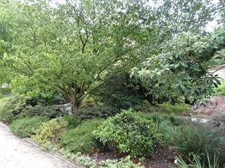 2016.08.05-002 plantes acidophiles