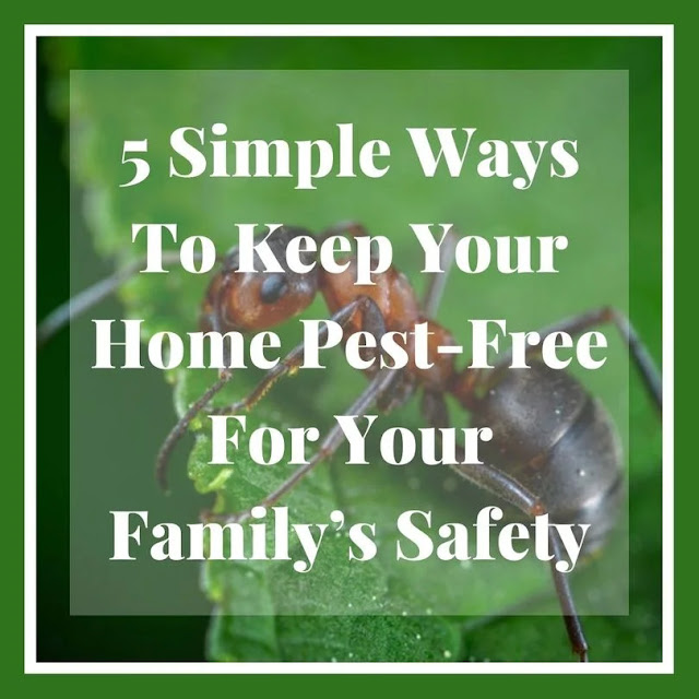 Keep your home pest-free