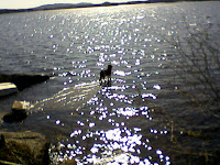 Bill på bryggan, lite högvatten!
