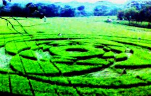 Crop Circles Ufo Di Sleman Jogjakarta