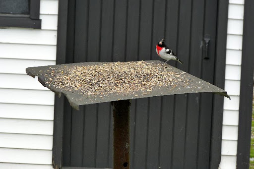 maud  et ses oiseaux 2011%252520P1030420