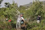 אמיר מפנה עצים