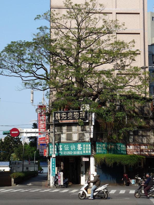 Face a la station de métro Taipower Building. Le bâtiment bas, a été construit AUTOUR de l'arbre afin de le conserver. Authentique