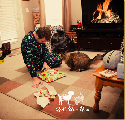 Bell Fur Zoo Christmas (Copyright Jenny@Bell Fur Zoo)