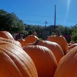 Pumpkin Patch 2014 - 116_4393.JPG