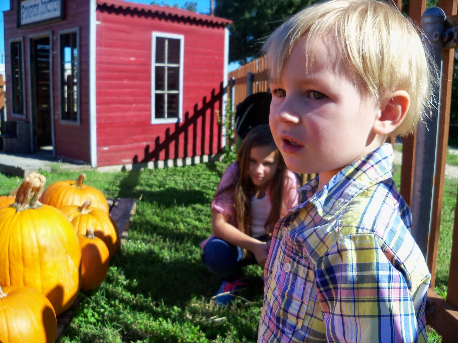 Pumpkin Patch 2014 - 116_4459.JPG