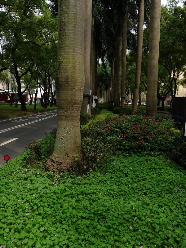 TAIWAN . Taipei De Shandao Temple jusqu à T 101 à pied... - P1160270.JPG