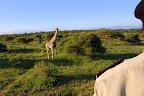 Det er alletiders fornemmelse at sidde på ryggen af en elefant og opleve de vilde dyr, som man passerer.