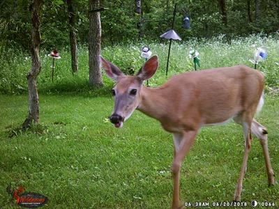 Deer JUne 20
