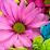 ROOPAVATHI YADA's profile photo