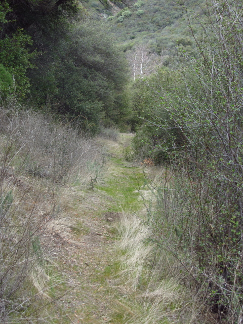grassy trail heading downhill