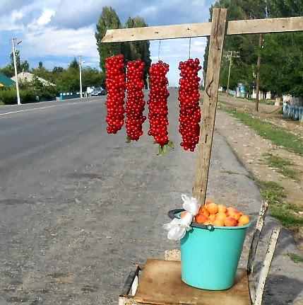 Kirschen und Aprikosen am Nord-Ufer des Ysyk Köl, Kirgistan